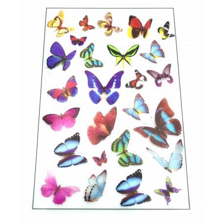 Foglio Farfalle
